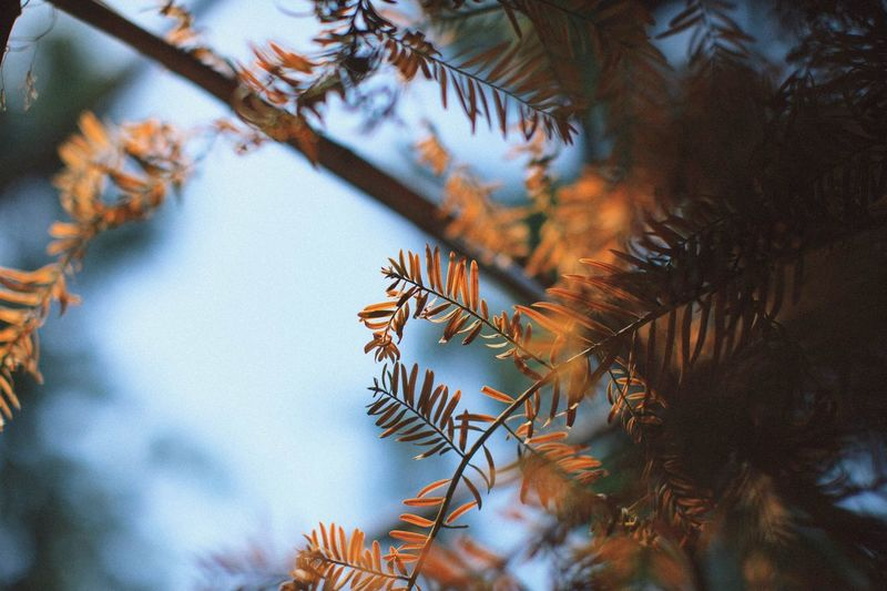 summer come EyeEm Selects Tree Plant Nature Beauty In Nature No People Tranquility Growth Low Angle View Sky Branch Day Leaf Coniferous Tree Scenics - Nature