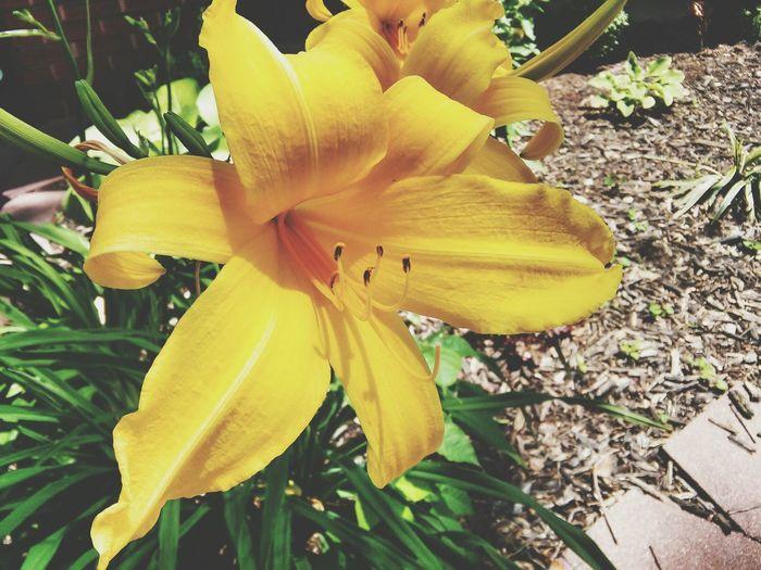 AtFriendsPlace Flower Yellow