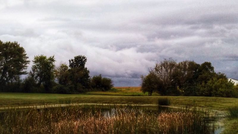 Perspectives On Nature Natures Beauty Full Length Pond Close Up Pond View Trees Cloud - Sky Nature Field Sky Beauty In Nature Landscape Rural Scene Agriculture Storm Cloud Weather No People Tranquility Scenics Grass Dramatic Sky Tranquil Scene Outdoors Day Growth