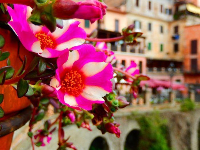 Town Flower