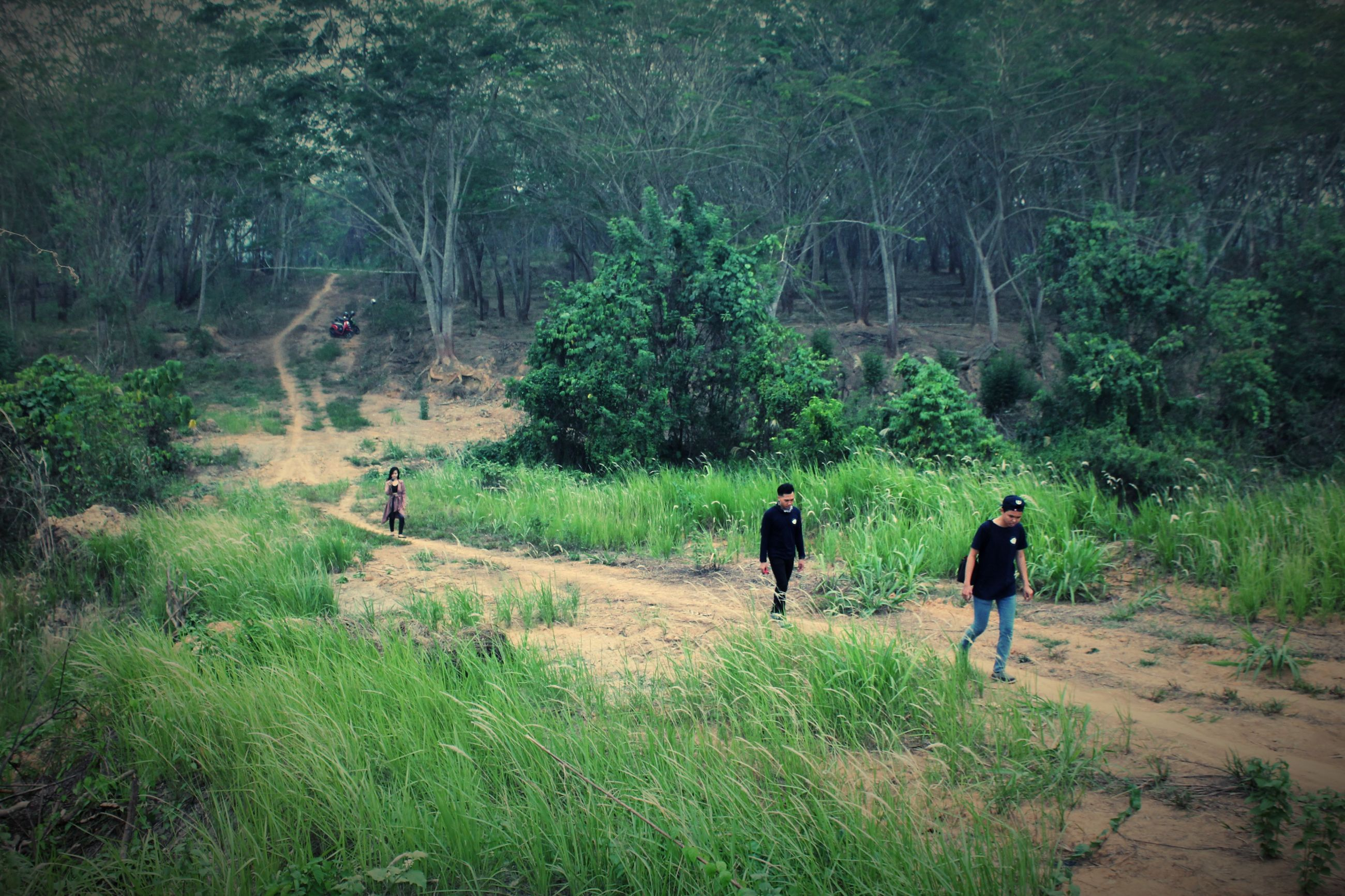 tree, forest, full length, walking, leisure activity, lifestyles, tranquil scene, dirt road, tranquility, nature, vacations, woodland, beauty in nature, green color, scenics, footpath, non-urban scene, casual clothing, outdoors, growth, person
