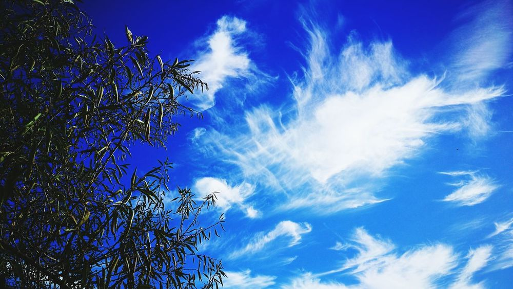 Blue Sky Low Angle View Beauty In Nature Nature No People Tranquility Tree Outdoors Scenics Day Close-up Almond Tree Almondtree Cloud - Sky Cloudscape Cirrus Clouds Cirrusradiatus Cirrostratus