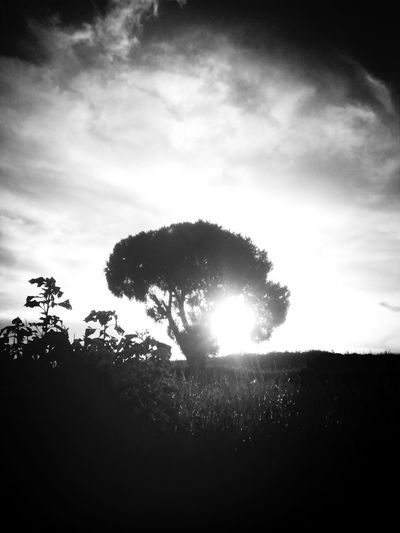 Atardecer Black & White