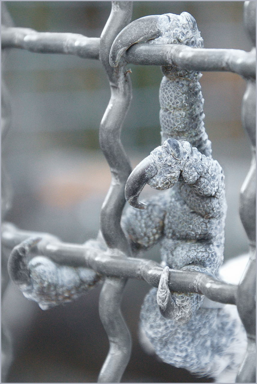 focus on foreground, close-up, metal, no people, safety, protection, security, chain, day, selective focus, barrier, fence, strength, boundary, outdoors, pattern, connection, hanging, wire, iron - metal, iron, silver colored