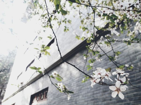 Flower Head Tree Flower Branch Springtime Hanging Twig Close-up Architecture