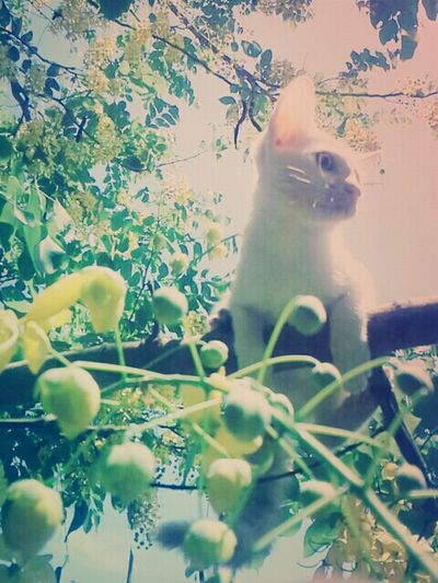 Under the tree Catsofinstagram Lovely Mayqueen May 2016
