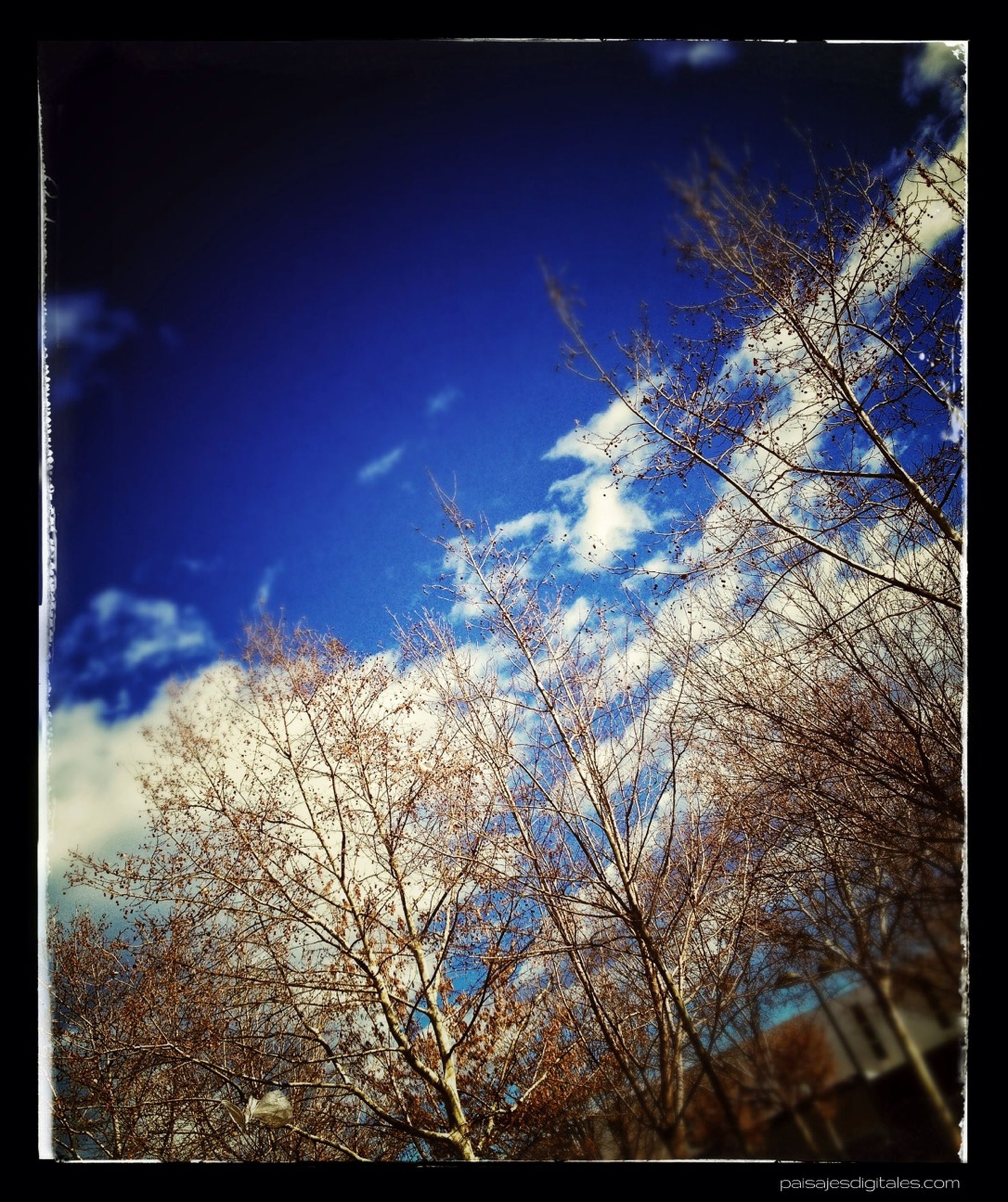 transfer print, auto post production filter, bare tree, tree, sky, low angle view, branch, blue, tranquility, nature, growth, beauty in nature, tranquil scene, scenics, day, cloud - sky, outdoors, no people, silhouette, cloud