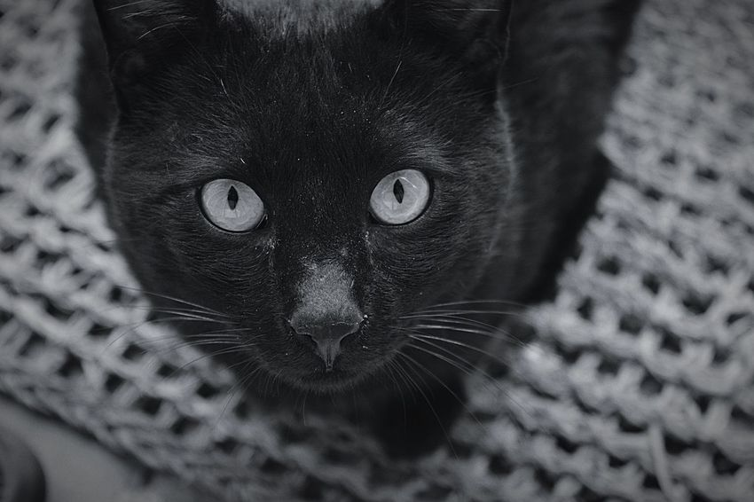 BLackCat B&w Eyes Eyem Best Shots Nikon D5200 Eyemphotography