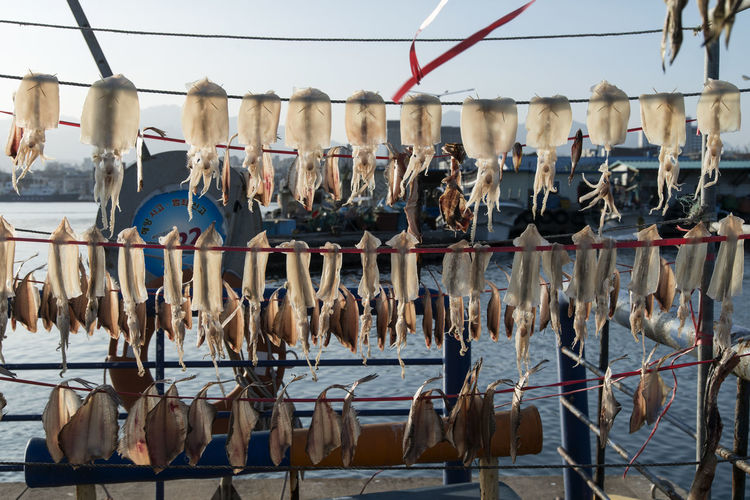 Fish drying on rope at harbor