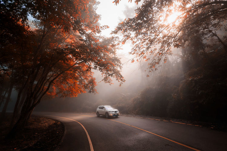Cars on road against trees during foggy and sunbeam at autumn
