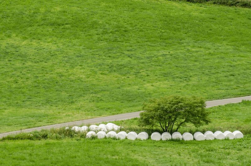 Covered Hay Bales On Green Landscape