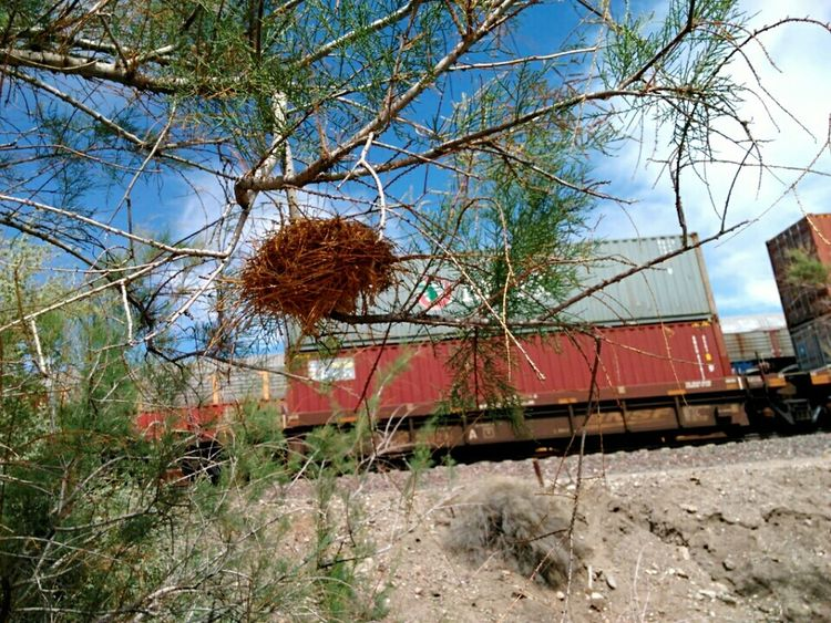 Bird Nest The KIOMI Collection Train Tracks Cargo Traveling Economics Walking Around Taking Photos Point Of View Life Lifestyle Mojave Desert California Landscape Landscape_Collection EyeEm Best Shots EyeEm Desert Southern California Landscapes Route 66 Showcase April Hello World Spring Naturelovers