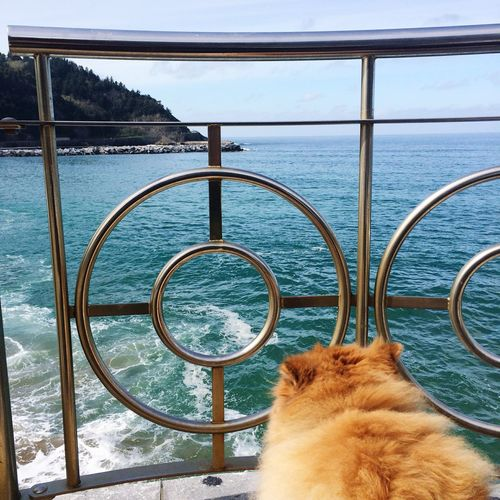 Dog Love Dog❤ Dogslife Dogstagram Doglover Dogoftheday Dog Days Dog Of The Day ChowChow Chow Chow Chowchowlove Chowchowmix🐶 Mar Sea Seaside Sea View