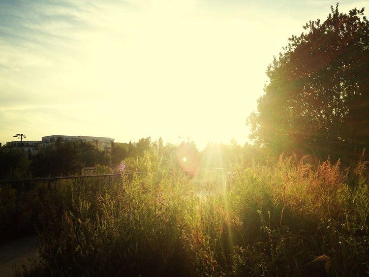 Walking Around Soaking Up The Sun Sunset Relaxing