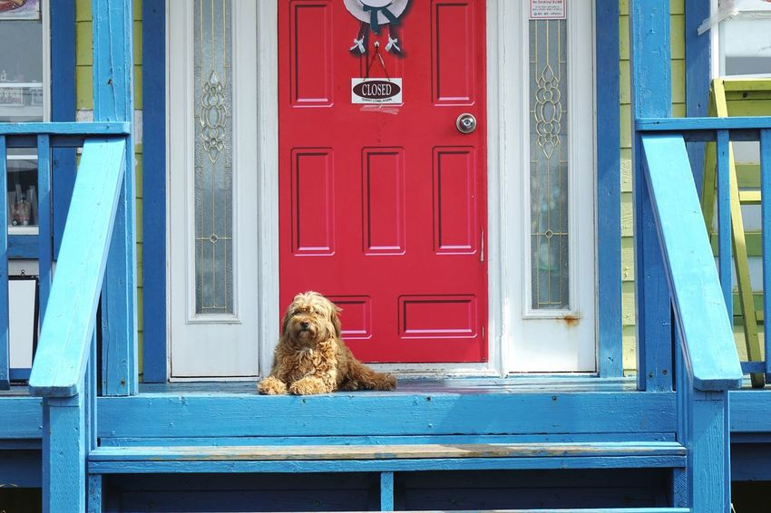 my house Animals Dogs Friendly Animals Contrasting Colors Photospot Pet Sunny Day JEJU ISLAND