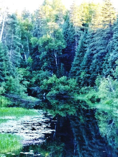 Nature River View River Nature Camping Trees Bird Earth Pleasure Rejuvinating Tree Water Forest Backgrounds Lake Reflection Sky Needle - Plant Part Growing