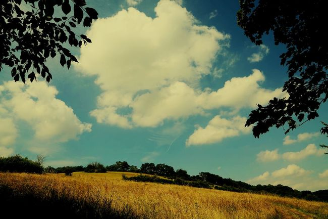 Clouds Clouds And Sky Blue Sky EyeEm Nature Lover Nature Hugging A Tree Nature_collection Tree_collection  Hills Summer Views Simplicity Learn & Shoot: Simplicity Sky And Clouds Skyobsessed Cloudobsession Taking Pictures No People Colours Of Nature Peace And Quiet Fields Simple