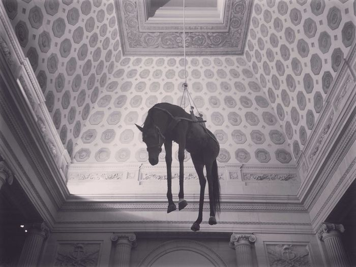 Exhibition Creepy Hanging Horse Dead Paris New Talents My Year My View
