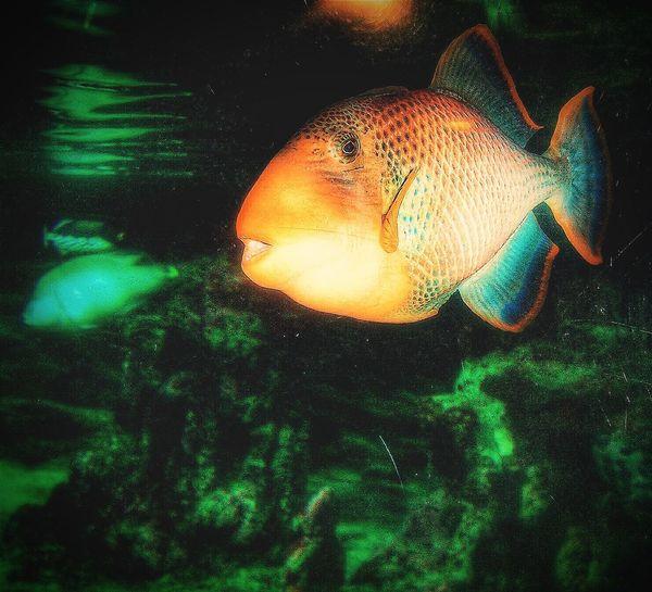 """"""" Fish"""". Aquarium Acquario Acquario Di Genova Pesci Animals Water Life Aquatic Point And Shoot / heavily Edited /"""