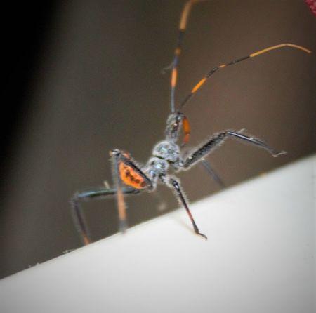 Bug Animal Wildlife Creepy Insect Nature Selective Focus Spider-bu Strange
