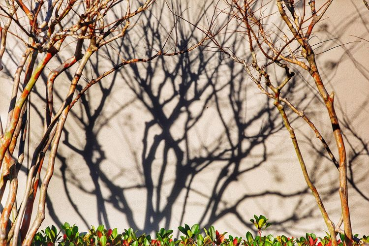 Only the shadow knows. Landscape Design Landscape Feature Landscape Wall Shadows JGLowe EyeEm Selects Bare Tree Branch Tree Outdoors Nature Day Beauty In Nature No People Plant