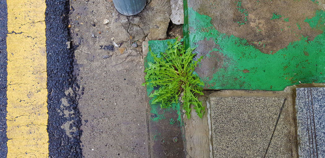 Self Control Architecture Building Exterior Built Structure City Close-up Concrete Day Green Color Growth High Angle View Leaf Nature No People Old Outdoors Plant Plant Part Textured  Wall Wall - Building Feature Weathered