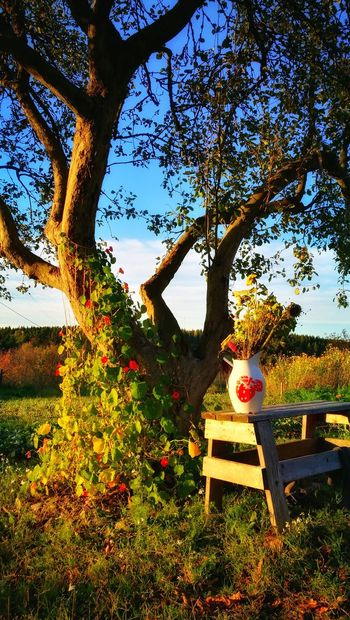 Tree Tranquil Scene Countryside Nature Autumn Thisisfinland Luonto Luontokuvaus Beauty In Nature Photoart Visitfinland Tree Trunk Remote Sky Branch Outdoors Flowers