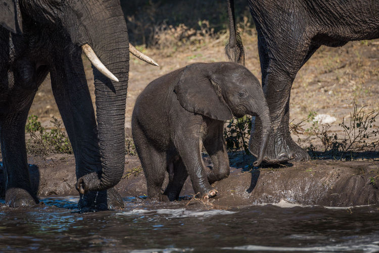 Elephant family at waterhole in forest