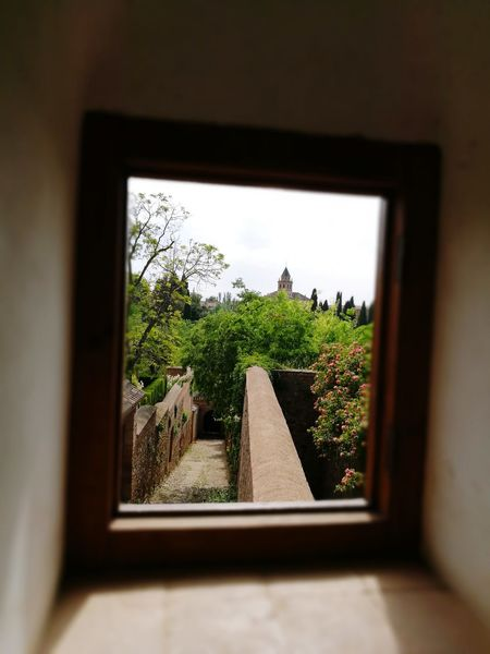 Window Tree Indoors  House Home Interior Window Sill Day Plant Architecture Frame Looking Through Window Built Structure No People Sky Photography Themes Nature Close-up