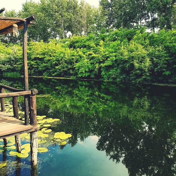 Nature River Serbia Serbianature