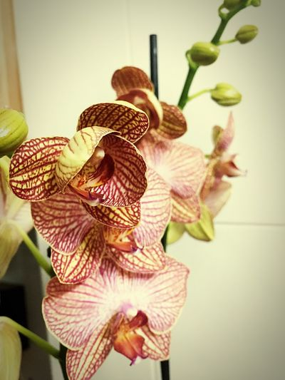 Orchids Investing In Quality Of Life