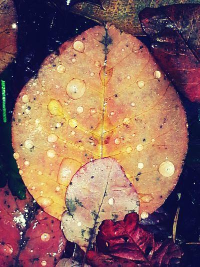 Raindrops on Leaves. Autumn Colors KimberlyJTilley
