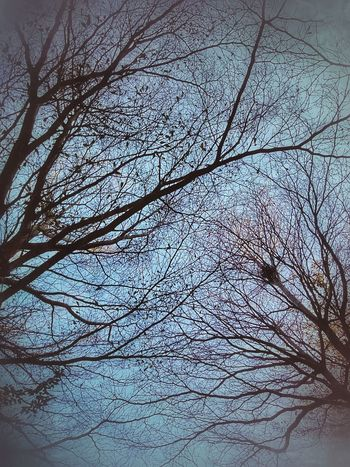 Tree Tree Photography Tree_collection  Tree View Color Of Tree Colorful Tree Beauty Of Tree Beautiful Tree