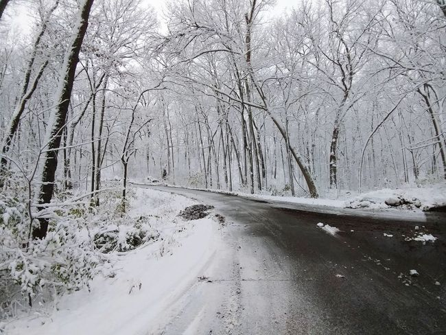 Tree Snow Nature Winter Cold Temperature Beauty In Nature Landscape Forest Day No People Outdoors Scenics Tranquility Road Plow Snow ❄ White Road Curve Winter EyeEmNewHere