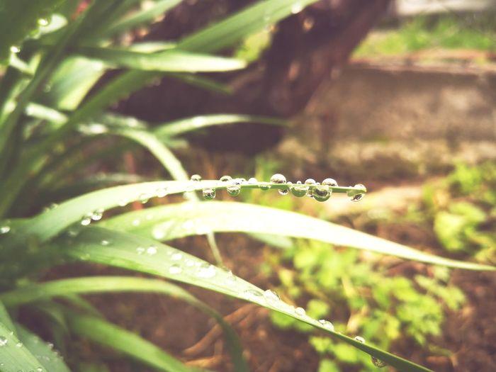Leaf Tropical