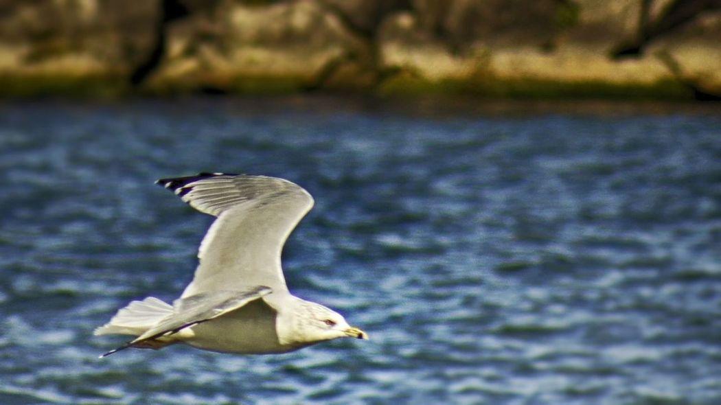 Ohio Ashtabula County Seagull Lake Erie
