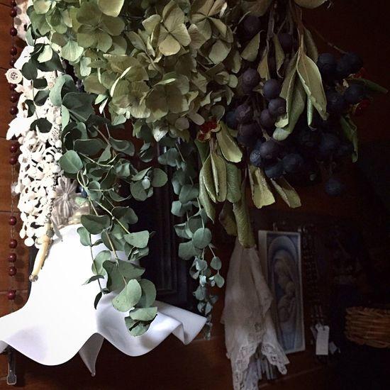 Green Classy Vintage Style Vintage Flower Flowers Hydrangea Greenleaf Photooftheday Dailyphoto