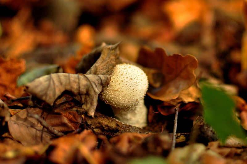 Close-Up Of Mushroom On Field During Autumn