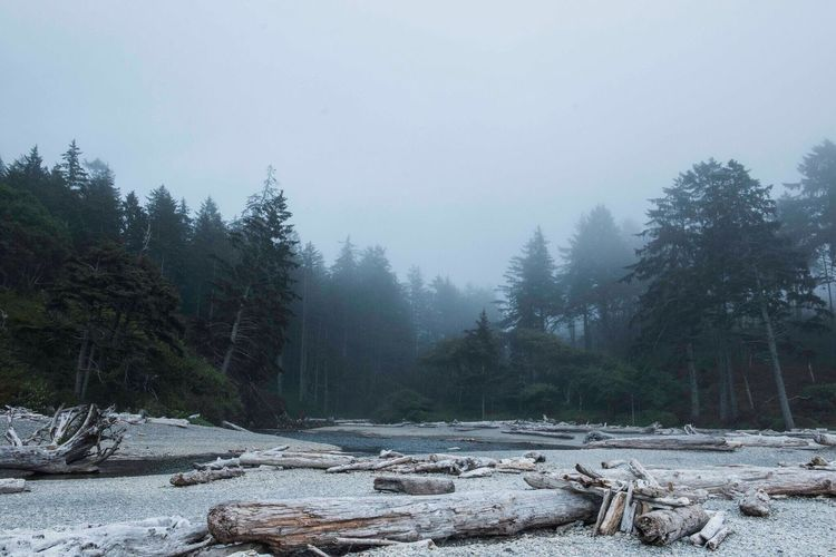 Driftwood in foggy weather at olympic national park