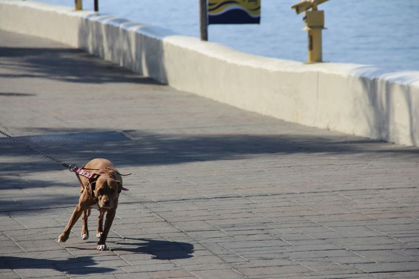 run boy run Dogstagram Dog Captured Moment AllCreaturesGreatAndSmall