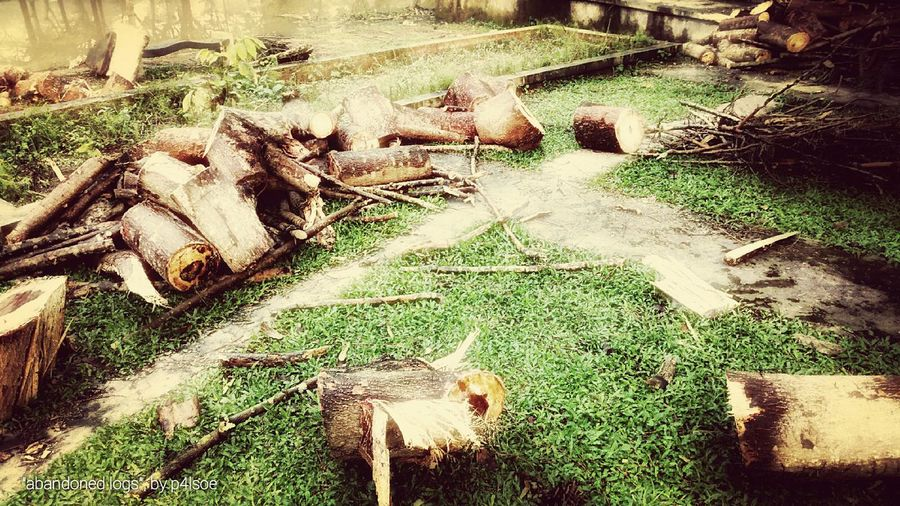 Abandoned Logs by P4lsoe