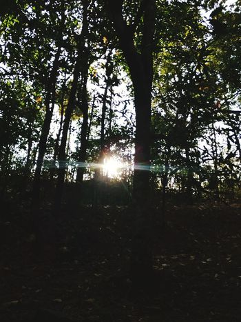 Firstnewyearpicture Timepass Clicks Tree Nature Sun No People Beauty In Nature Sunbeam Eveningtime Taking Photos Intotheforest