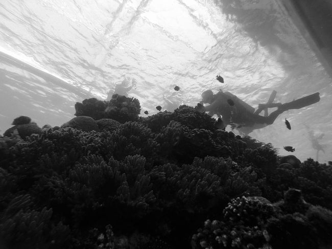 Diver above corals, Moalboal (Cebu, the Philippines) Adventure Animal Themes ASIA Black & White Cebu Exploring Extreme Sports Leisure Activity Lifestyles Nature Outdoors Philippines Real People Scuba Diver Scuba Diving Sea Life Sport Swimming Travel Travel Destinations Underwater Unrecognizable Person Vacations