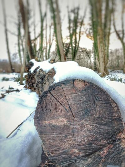 Close-up of snow covered tree trunk in forest
