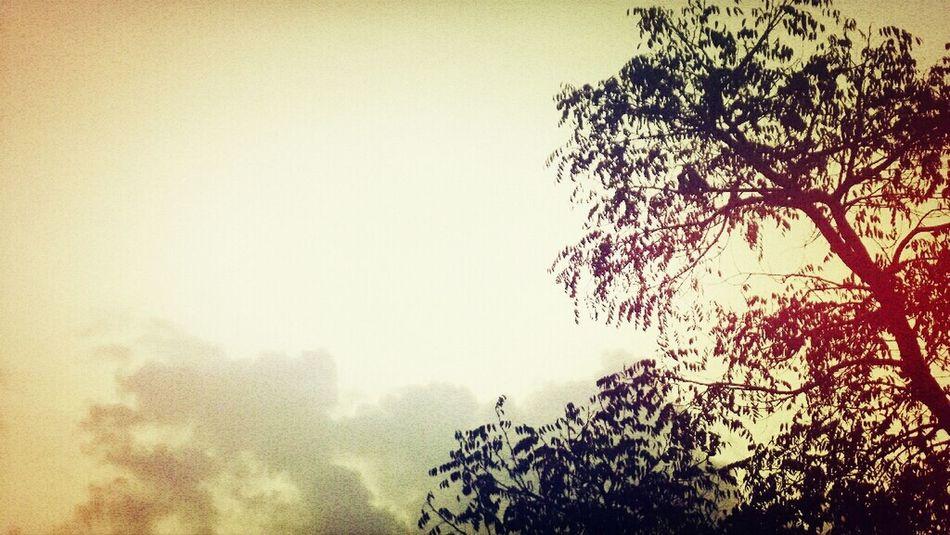 Nature Endofday