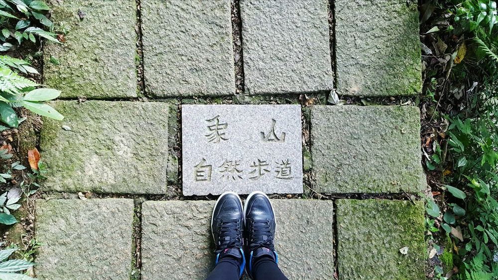 象山步道 101 Taipei 象山101 Rear View Tree Nature Outdoors Sky Dog❤ First Eyeem Photo 象山