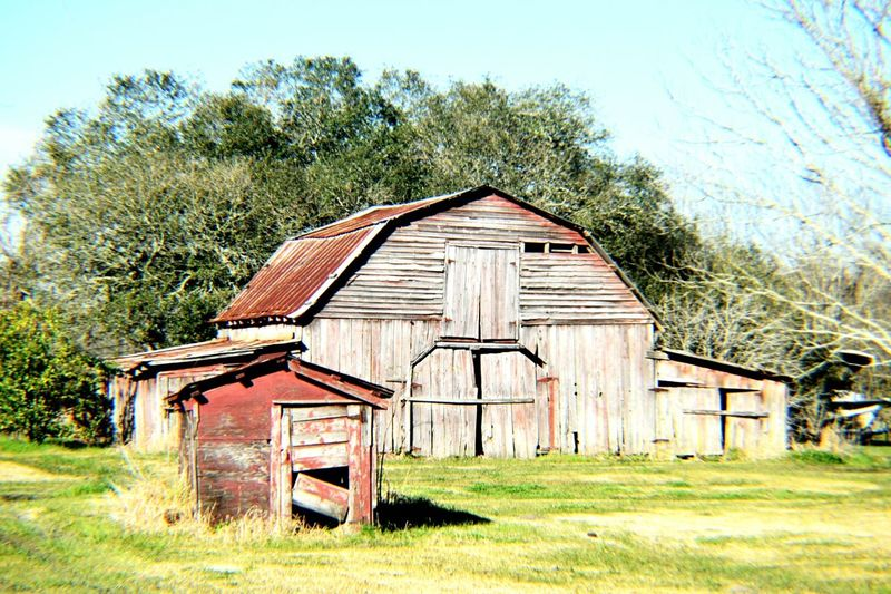 Old barn Red barn Barnstalker Greenery Trees Sky Daylight Rusty Roof Metal Roof Rust South Louisiana