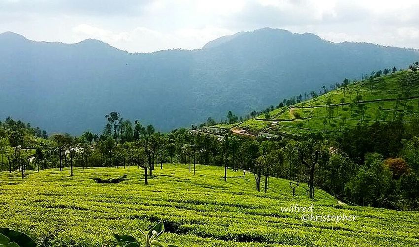 Scenic beauty of OOTY ,INDIA First Eyeem Photo