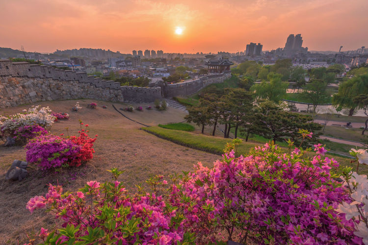 View of flowering plants at sunset