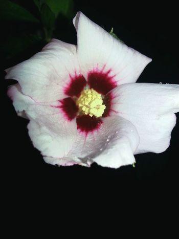 Flower Colors Nature Beautiful Wonderful Shades Flowerporn😎 LoveFlower🌺 Contrast NaturePhotography🌼 ❤
